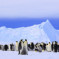 Antarctica Cruises, an intrepid idea for an unforgettable experience