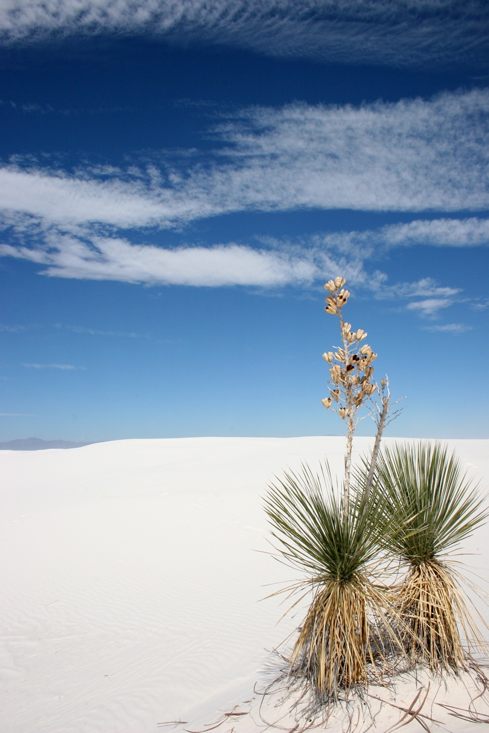 White Sands National Park, Mexico.