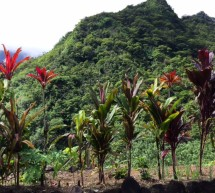 Tahiti – Food and Landscapes in French Polynesia's Least Beloved Island