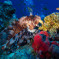 Snorkelling in Dahab – Egypt' Undersea Treasure